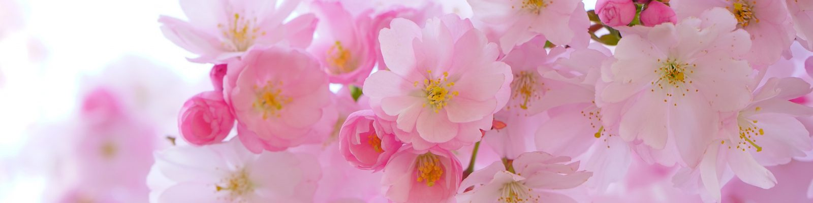 japanese cherry for Guy Wakeling jewellery